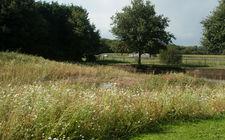 Bloemenweide - Sylvan