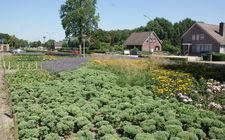 Onderhoudsarm plantsoen Boxmeer - augustus 2013
