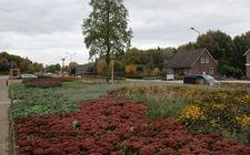 Onderhoudsarm plantsoen Boxmeer - oktober 2013
