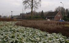 Onderhoudsarm plantsoen Boxmeer - januari 2014