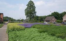 Onderhoudsarm plantsoen Boxmeer - mei 2014