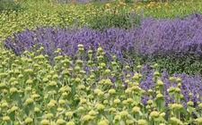 Onderhoudsarm plantsoen Boxmeer - juni 2014