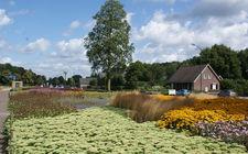 Onderhoudsarm plantsoen Boxmeer - augustus 2014