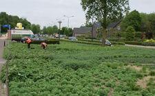 Onderhoudsarm plantsoen Boxmeer - mei 2015