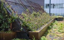 Natürlicher Dachgarten La Vie Meeting Center