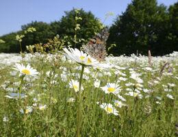Planung und Realisierung von Blumenwiesen