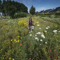 Pflege der Blumenwiesen
