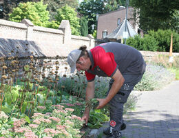 Pflege des pflegeleichten Gartens