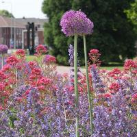 Planung und Realisierung pflegeleichter Gärten